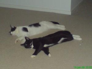 My Cats Sushi & Mickey